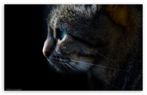 Download Cat, Animal, Dark UltraHD Wallpaper