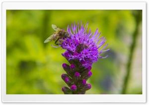 Enjoying Bee