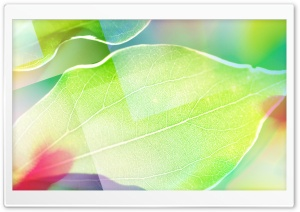 Colored Leaves 6
