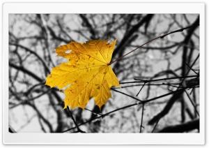 Single Yellow Leaf