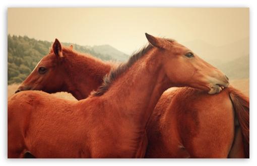 Download Horses UltraHD Wallpaper