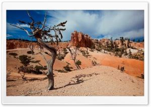 Desert Tree Shadow