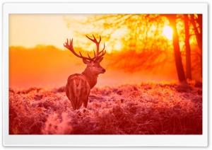 Deer Under The Sunset Warm...