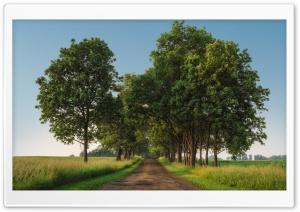Rural Road, Green Trees,...