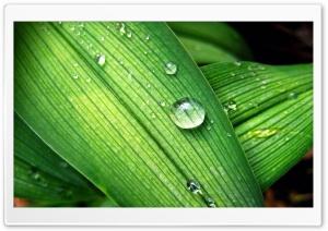 Backyard Raindrops
