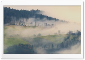 Fog, Forest Trees, Field