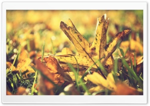Dried Leafage