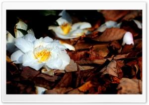 White Fallen Flowers