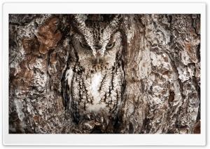 Eastern Screech Owl, Georgia