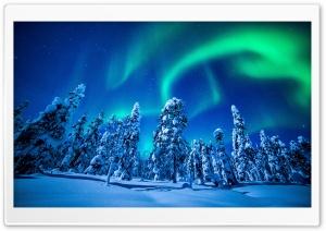 Northern Lights Over Forest,...
