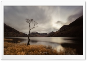 Buttermere Lake, Lone Tree,...
