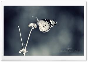 Butterfly-3 BW