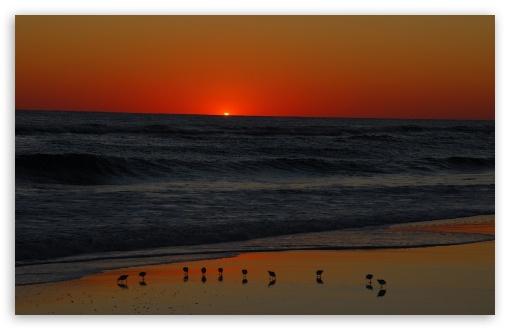 Download Seagulls On Beach At Sunset UltraHD Wallpaper