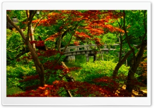 Japanese Garden (Kyoto)