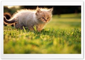Fluffy Kitty 2