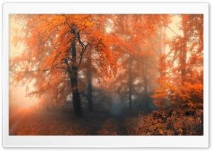 Amazing Orange Trees