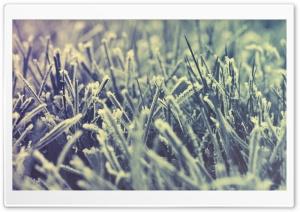 Frozen Grass -Winter
