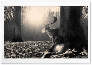 Stag Winter