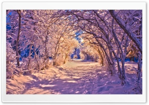 Snowy Tree Archway