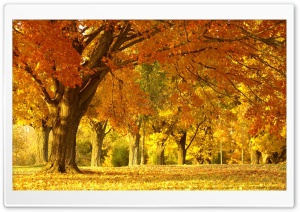 Yellow Trees, Fall
