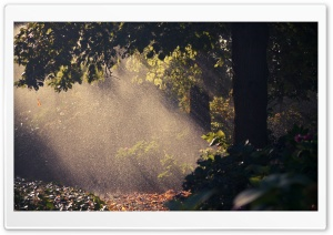 Summer Rain, Forest