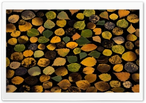Fall Leaves Background...