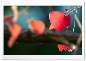 Red Leaves Macro