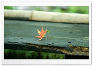 Red Leaf On The Bench