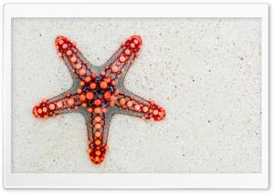 Red Starfish on Beach