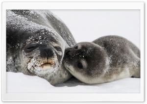 Cute Baby Seal Kiss
