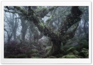Wistman s Wood, Dartmoor...
