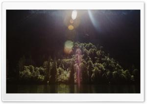 Sunshine, Forest Trees, Lake