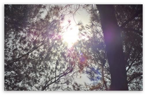 Download Sun Shining Through The Crown of Tree UltraHD Wallpaper