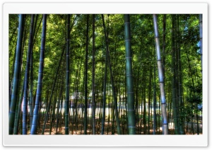Inside The Bamboo Forest