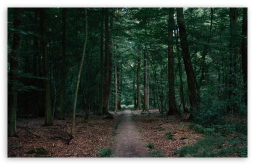 Download Walking In The Woods UltraHD Wallpaper