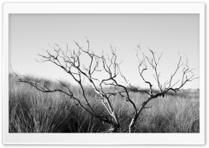 Dry Tree Black And White
