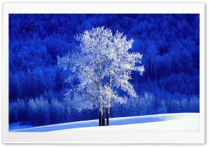 Winter, British Columbia, Canada