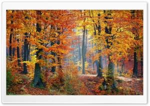 Foliage, Autumn