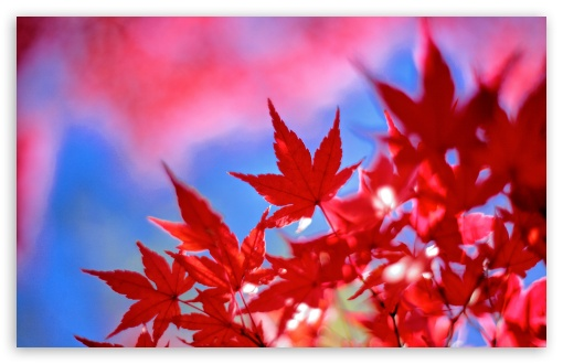 Download Late Autumn Colors UltraHD Wallpaper
