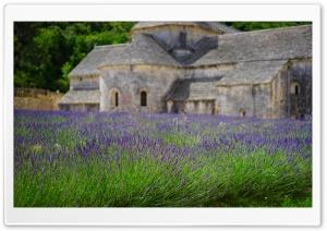Lavender Garden, Monastery