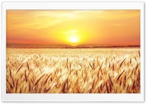 Golden Field Crops
