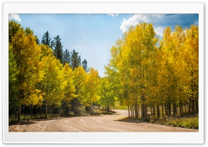 Dirt Road Aspens