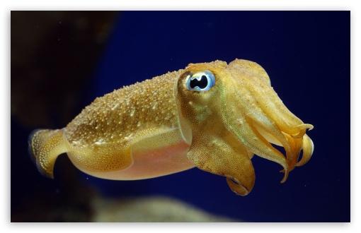Download Cuttlefish UltraHD Wallpaper