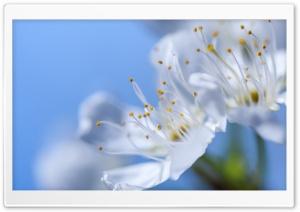 Blossom, Blue Spring Sky