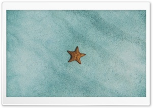 Starfish Ocean  Underwater