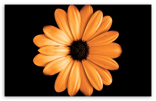 Download FoMef - Orange Flowerdark UltraHD Wallpaper