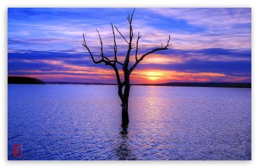 Download Tree, Clinton Lake UltraHD Wallpaper