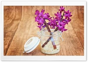 Two Purple Hyacinths