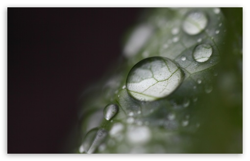 Download Water Drops Bokeh, Macro UltraHD Wallpaper