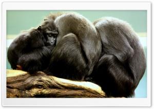 Cute Black Monkey Family